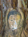 Head of Buddha Statue in Mahathat temple is covered by roots of a tree Stock Photo