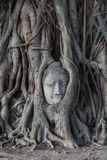 Head of buddha statue in the Pho tree roots at Wat Mahathat temp. Le, Landmark of Ayutthaya, Thailand stock photography