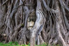Head of Buddha statue in root of bodhi tree at Wat Mahathat in Ayutthaya Thailand stock photo