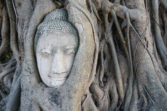 Head of buddha statue in the roots of tree at Ayutthaya, Thailand Royalty Free Stock Photography
