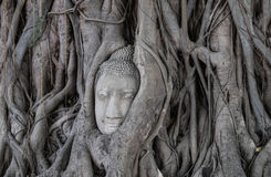 Head of buddha statue Stock Images