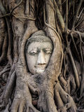 Head of Buddha Statue in the Tree Roots, Ayutthaya, Thailand Royalty Free Stock Photos