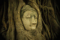 Head of Buddha statue in the tree roots, famous tourism spot of. Thailand Royalty Free Stock Photos