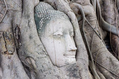 Head of Buddha statue in the tree roots at Wat Mahathat, Ayuttha Stock Image
