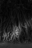 Head of Buddha statue in the tree roots Royalty Free Stock Images