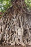 Head of Buddha Statue Stock Photos