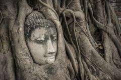 Head of Buddha statue in the tree roots at Wat Mahathat, Ayutthaya, Thailand. Stock Photo