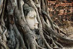 Head of Buddha Statue with the Tree Roots at Wat Mahathat, histo Royalty Free Stock Images