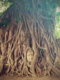 The Head of Buddha statue in the tree roots, Wat Mahathat temple. Ayutthaya Historical Park, Thailand Royalty Free Stock Photos