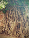 The Head of Buddha statue in the tree roots, Wat Mahathat temple. Ayutthaya Historical Park, Thailand Royalty Free Stock Photo