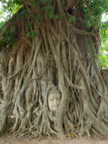 The Head of Buddha statue in the tree roots, Wat Mahathat temple. Ayutthaya Historical Park, Thailand Stock Photos