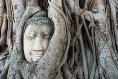 Head of Buddha statue in the tree roots at Wat Mahathat temple Stock Photography
