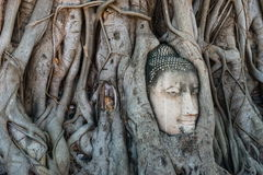 Head of Buddha statue in the tree roots at Wat Mahathat temple Stock Photo