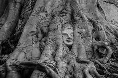 Head of Buddha statue in the tree roots at Wat Na Phra Meru Royalty Free Stock Photography