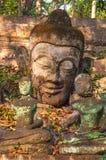 Head Buddha staty i Wat Umong Royaltyfria Bilder