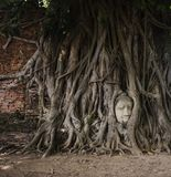 Head of Buddha in tree roots, Ayutthaya Royalty Free Stock Image
