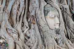 Head Buddha in the tree roots,At Wat Mahathat temple,Ayutthaya Royalty Free Stock Photography