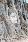 Head Buddha in the tree roots,At Wat Mahathat temple,Ayutthaya Stock Photography