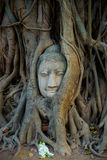 Head of Buddha in the trees Stock Photos