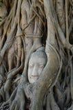 Head Buddha Wat Mahathat Ayutthaya Temple Arkivfoto