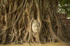 The Head of Buddha in Wat Mahathat, Ayutthaya. Stock Image