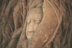 Head of Buddha at Wat Mahathat Royalty Free Stock Photography