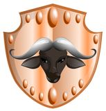 Head of buffalo Royalty Free Stock Photo