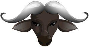 Head of buffalo isolated royalty free stock photography