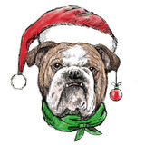 Head of bulldog with santa claus hat Stock Photo