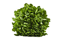 A Head of butter lettuce on white Stock Images