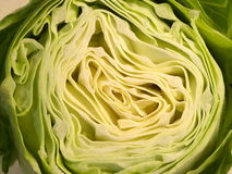 Head of cabbage Royalty Free Stock Image