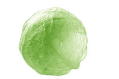 Head of cabbage. Royalty Free Stock Image