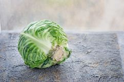 Head of cabbage cabbage, fresh harvest close-up Royalty Free Stock Photos