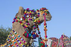 Head of a camel decorated with colorful tassels, necklaces and beads. Desert Festival, Jaisalmer, India Royalty Free Stock Photos