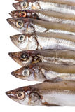 Head of capelin Stock Image