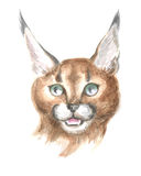 Head of the caracal Royalty Free Stock Photos