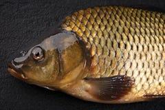 Head carp fish on the surface dark stone. Royalty Free Stock Photography