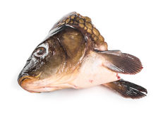 Head of carp. Royalty Free Stock Photos