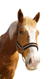 Head of the carthorse. On the white background Royalty Free Stock Photography