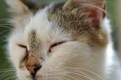 Head cat close up Stock Photography
