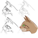 Head cat Stock Image