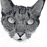 Head of a cat Stock Images