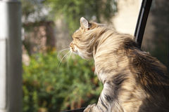Head Cat  out of a car window  in motion Royalty Free Stock Photos