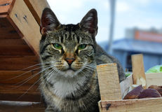 The head of the cat sitting among boxes. Stock Images
