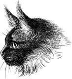 Head of cat vector illustration