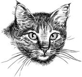 Head of cat Stock Photography