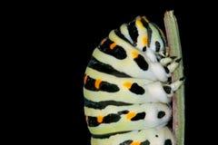 Head of caterpillar Royalty Free Stock Photo