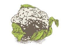 Head of cauliflower Royalty Free Stock Photos