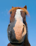 Head of chestnut horse Stock Photo