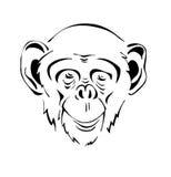 Head the chimpanzee Stock Photos